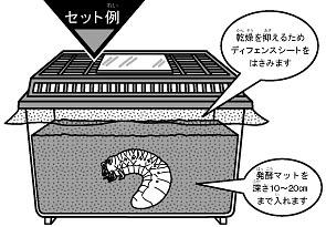 カブトムシ 幼虫 飼育 マット